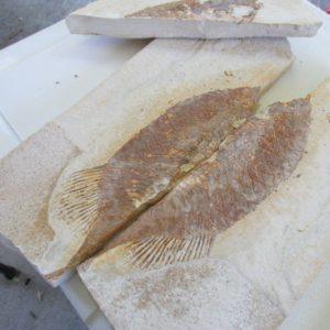 Kemmerer Trip - Another Big Fish